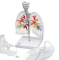 CT Bronchial Tree with Larynx and Transparent Lungs
